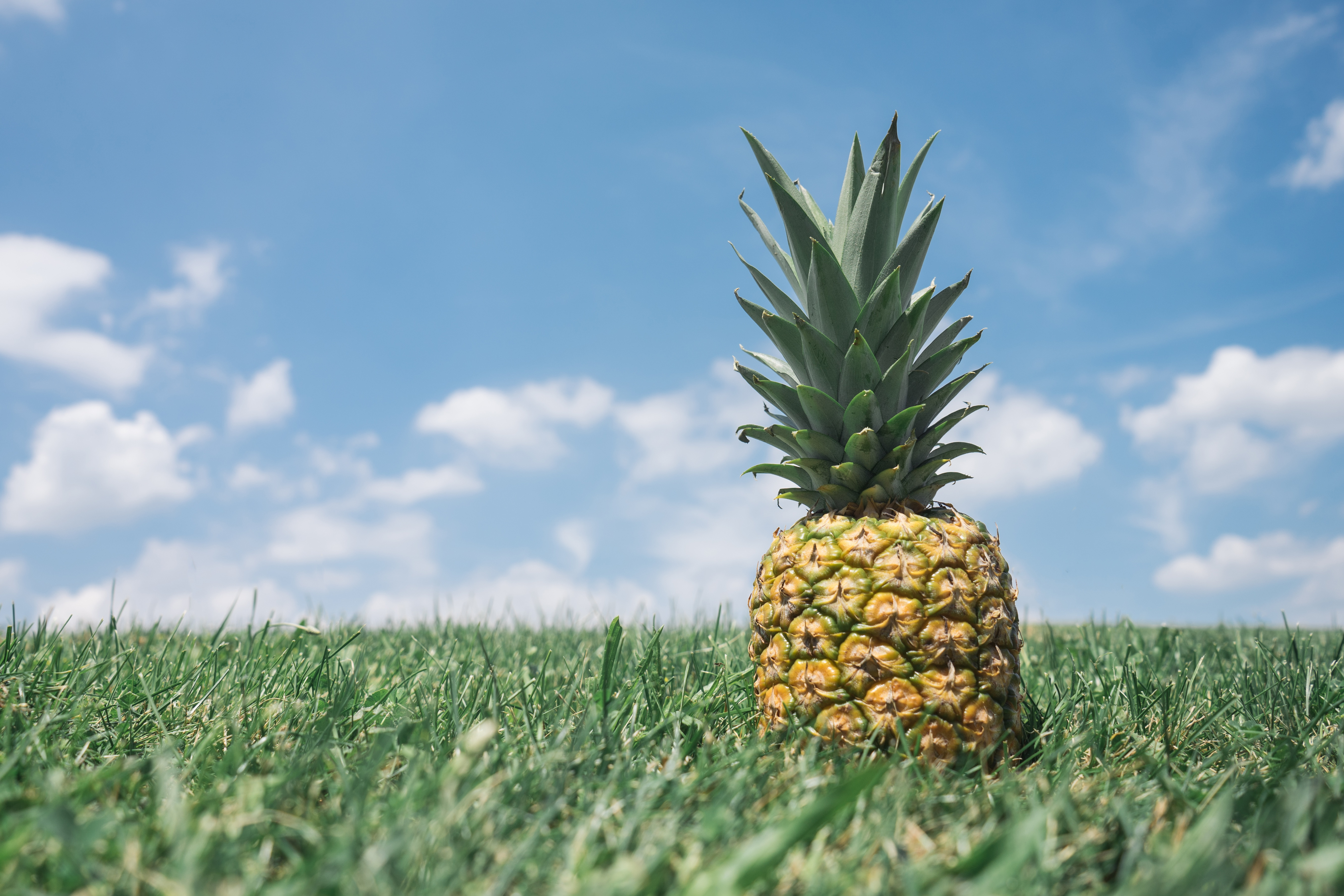 Pineapple sits in green grass